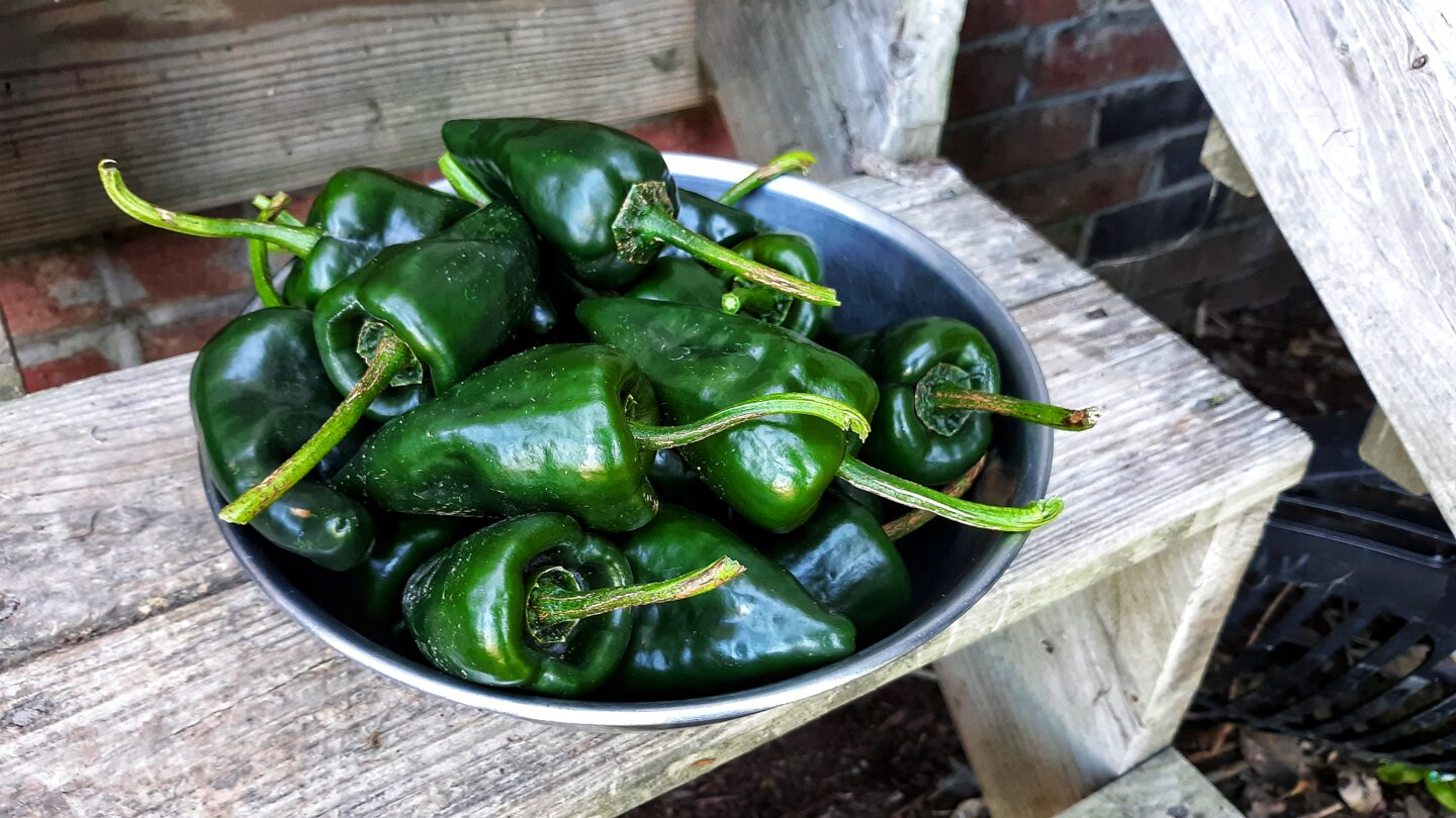 Preparing Poblano Peppers for the Freezer